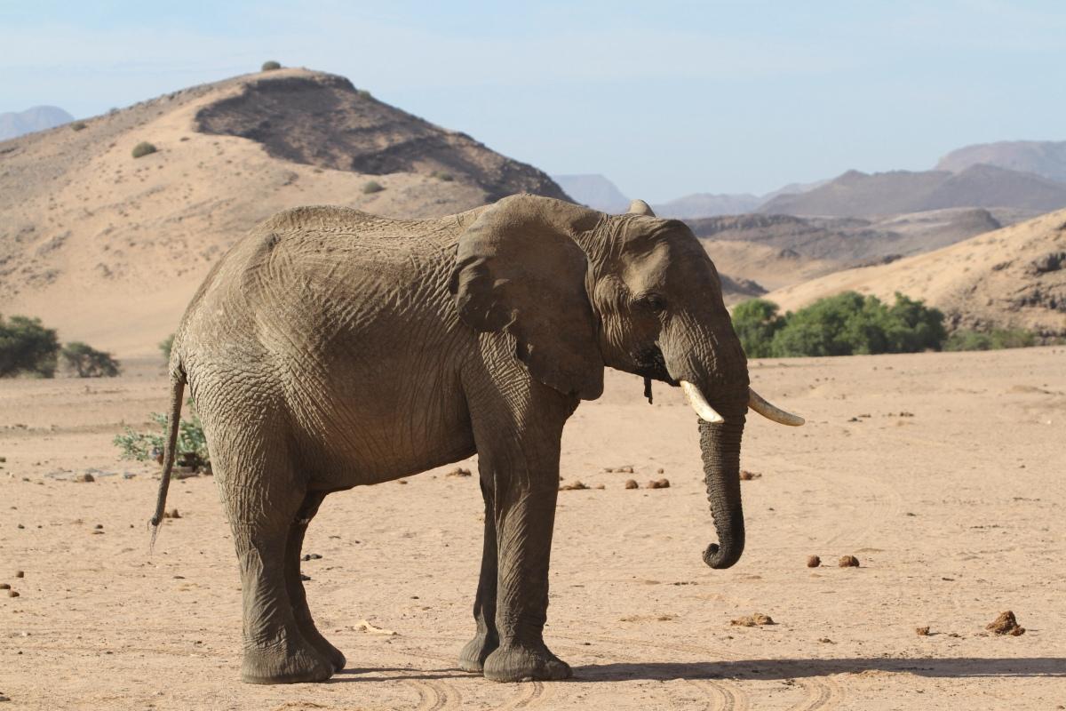 Damaraland – Twyfelfontein,Namibia
